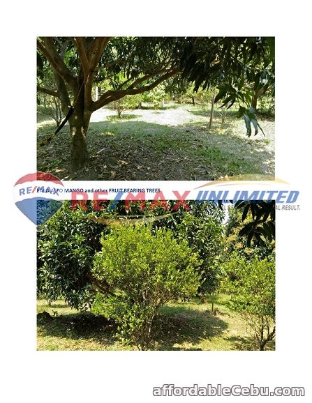 3rd picture of For Sale: Ideal Industrial, Commercial or Residential For Sale in Cebu, Philippines