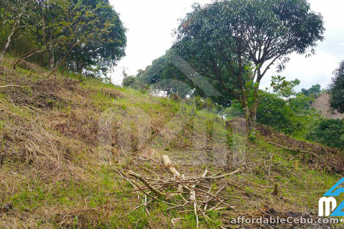 3rd picture of Farmville Subdivision(LOT ONLY) Cambayog, , Compostela, Cebu, Philipines For Sale in Cebu, Philippines