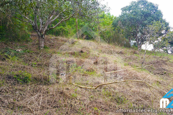 4th picture of Farmville Subdivision(LOT ONLY) Cambayog, , Compostela, Cebu, Philipines For Sale in Cebu, Philippines