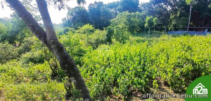 5th picture of Mia Verde Subdivision(LOT ONLY) San Isidro, Baclayon, Bohol, Philipines For Sale in Cebu, Philippines