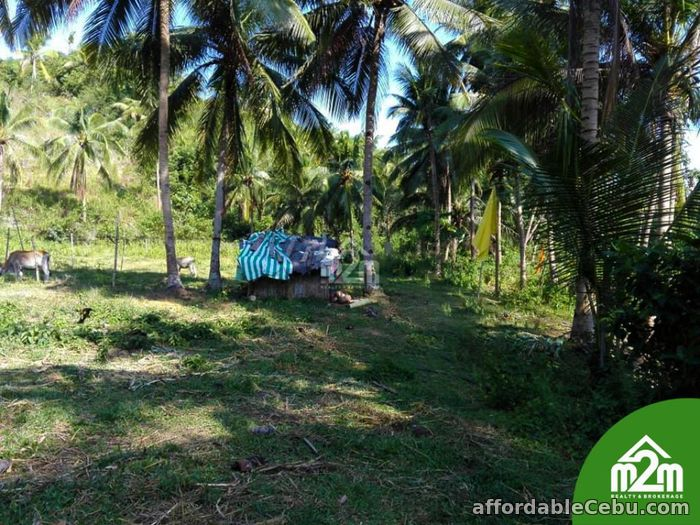 2nd picture of Mikaela Land Subdivision(LOT ONLY) Bagalnga,Compostela,Cebu,Philipines For Sale in Cebu, Philippines