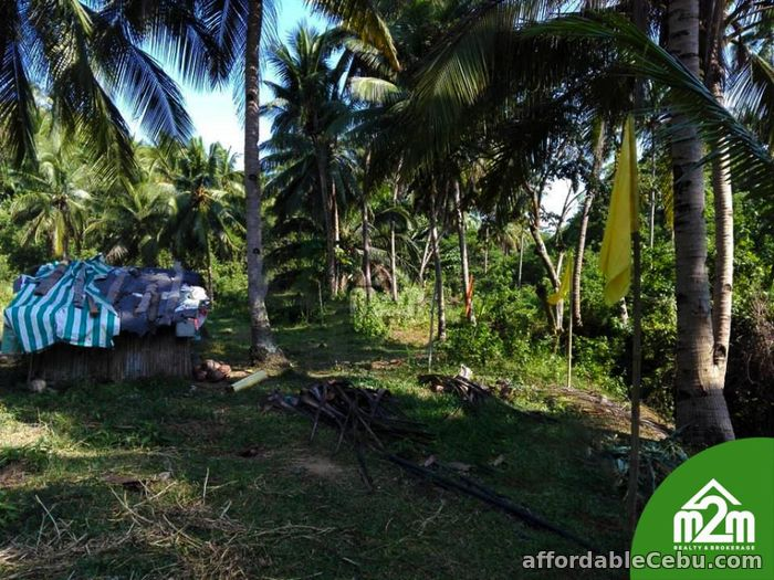 4th picture of Mikaela Land Subdivision(LOT ONLY) Bagalnga,Compostela,Cebu,Philipines For Sale in Cebu, Philippines
