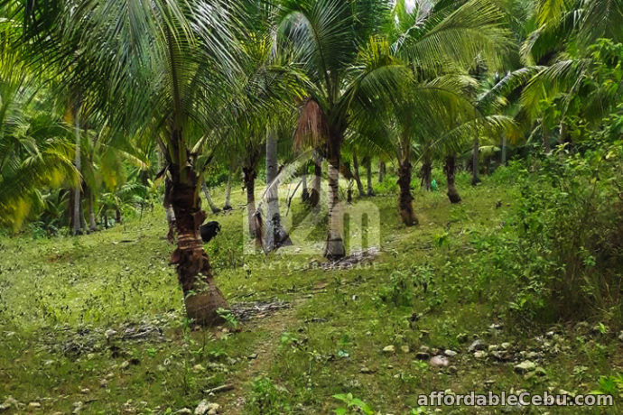 1st picture of Zoilon Farm Ville(LOT ONLY) Ipil Carmen, Cebu City For Sale in Cebu, Philippines