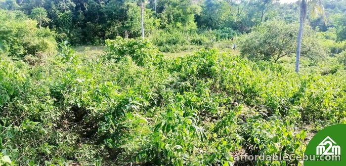 4th picture of Mia Verde Subdivision(LOT ONLY) San Isidro, Baclayon,Bohol,Philipines For Sale in Cebu, Philippines