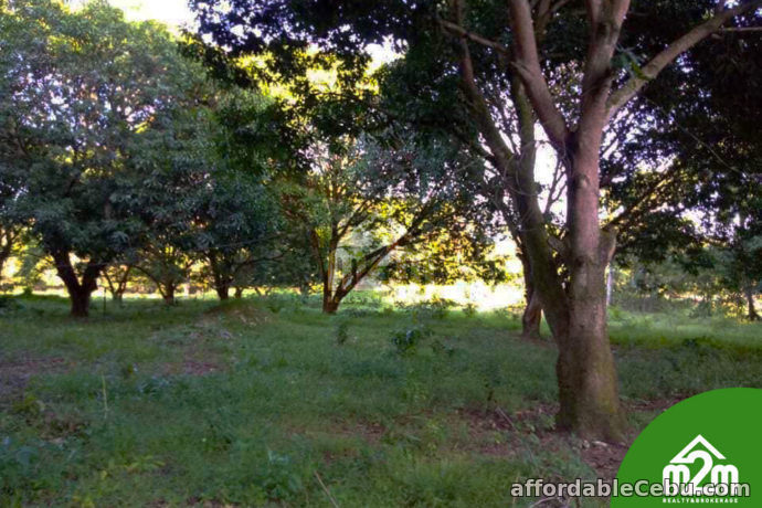 3rd picture of Shenna North Ville Subdivision(LOT ONLY) Brgy. Dawis Sur, Carmen For Sale in Cebu, Philippines