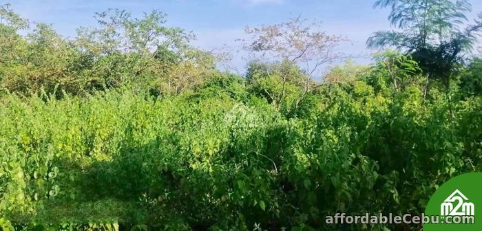 1st picture of Mia Verde Subdivision(LOT ONLY) San Isidro, Baclayon,Bohol,Philipines For Sale in Cebu, Philippines