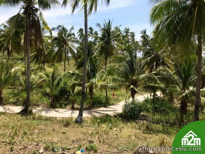 4th picture of Breeze Highlands(LOT ONLY)Sogod,Cebu,Cebu,Philipines For Sale in Cebu, Philippines