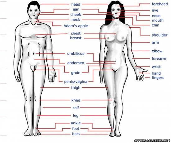 Picture of Cebuano / Bisaya Terms and Translation of the Human Body Parts