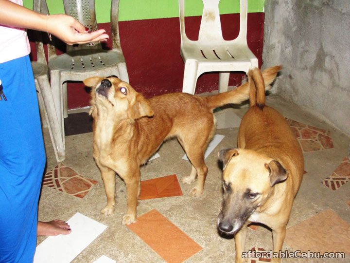 JK Jemzkoi Dogs