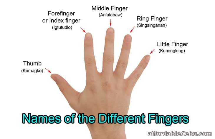 Names of Different Fingers