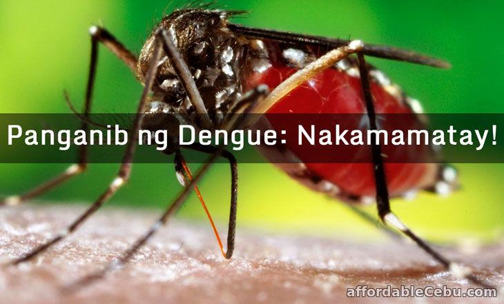 Panganib ng Dengue