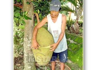 Biggest jackfruit in the world